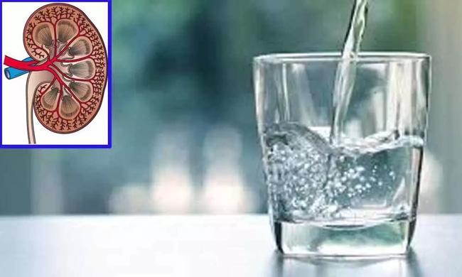 Computer kidney sheds light on proper hydration - Sakshi