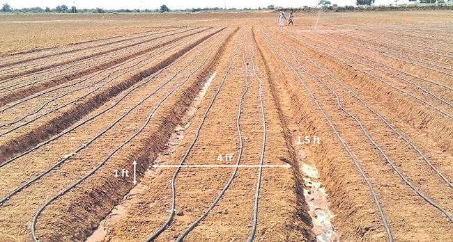 Vegetable cultivation are in daily profit - Sakshi