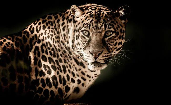 Girl Lay On Brother To Save Him From Leopard Attack In Uttarakhand Village - Sakshi