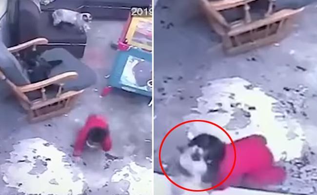 Viral Video: Cat Saved Boy From Falling - Sakshi