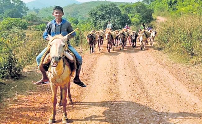 Horses are the transport system in Visakha tribal hordes even today - Sakshi