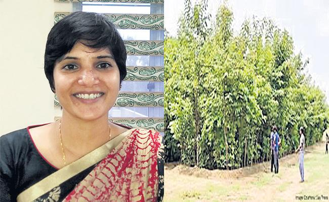 Mini Forest Soon in Gachibowli - Sakshi
