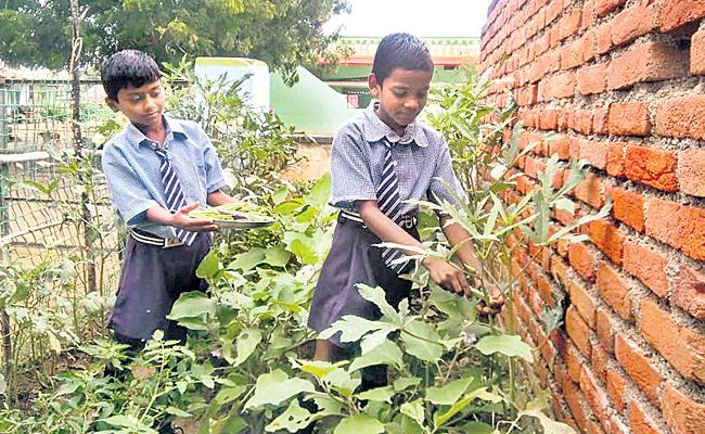 Youth Services Department Letter To District Collectors Over Kitchen Garden At Schools - Sakshi