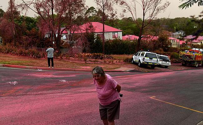 Sydney suburb of Turramurra: Pink Fire Retardant powder - Sakshi