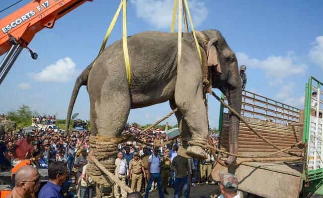 Assam Rogue Elephant Dies After Six Days In Captivity - Sakshi
