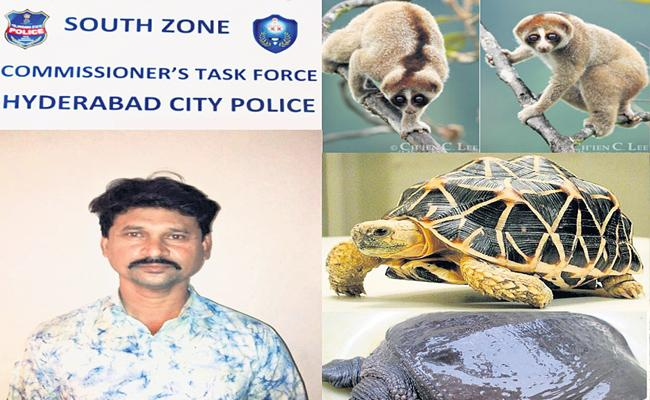 Wild Animals Sales Going On Secretly One Arrested In Telangana - Sakshi