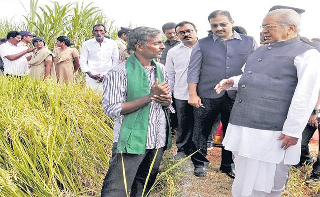 Biswabhusan Harichandan Inspection of Natural Farms in Rangannagudem - Sakshi