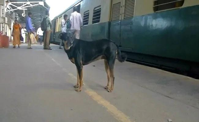 Abandoned Dog Barks At Those Flouting Rules At Chennai Railway Station - Sakshi