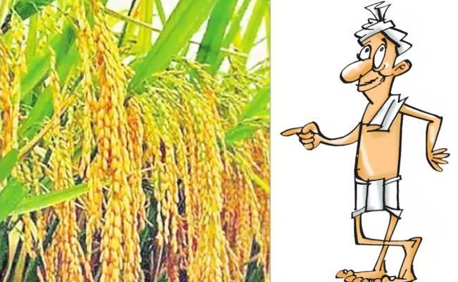 Hopeful Rice Crop Yields In West Godavari - Sakshi