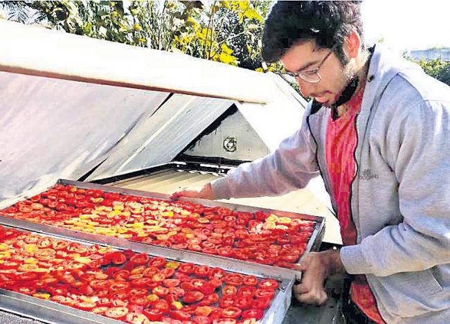 Solar dryers hold potential to cut food loss - Sakshi