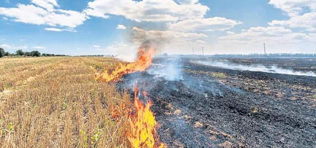 Burning grass releases more nitrogen pollution than burning - Sakshi