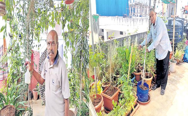 Roof Garden Farm In Hyderabad - Sakshi