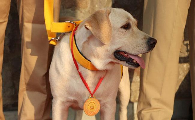 CISF Honours Canines On Retirement With Medals And Mementos - Sakshi
