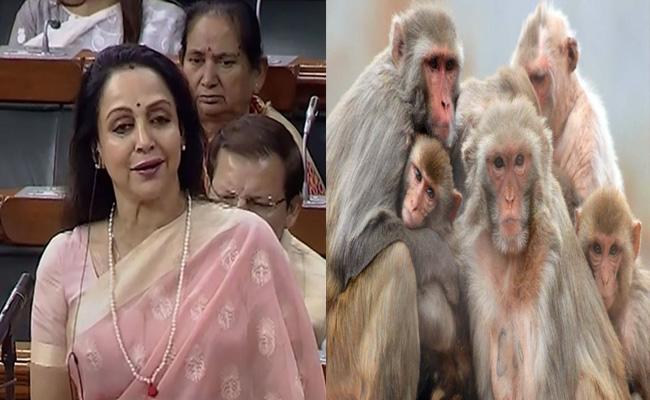 Debate On Monkeys In Lok Sabha - Sakshi