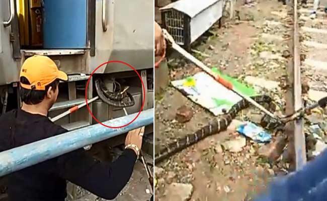 10 Feet King Cobra In Uttarakhand Rescued By Forest Officials From Train In Uttarakhand - Sakshi