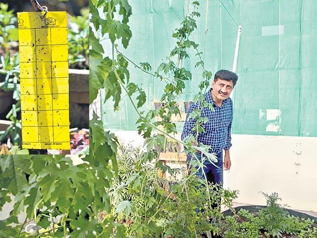 Flush out Garden Pests in Winter - Sakshi
