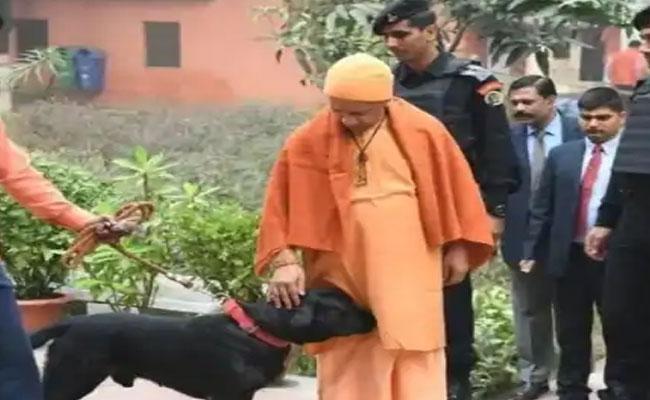 UP CM Yogi Adityanath Pet Dog Kalu Become Internet Celebrity - Sakshi