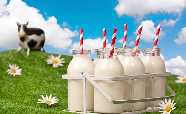 Cow Milk is always Better, Says Studies - Sakshi