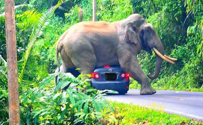 Viral: Elephant Sits On Car Narrow Escape For Tourists Inside - Sakshi
