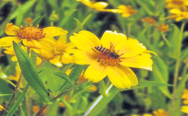 Valesa Flower Gardens Giving Profits In Visakha Manyam - Sakshi