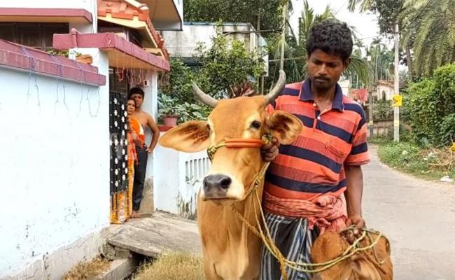 Bengal Man Wants Gold Loan Against Cows - Sakshi