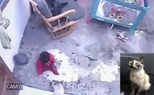 Viral Video: Cat Saved Toddler From Falling Down The Stairs - Sakshi