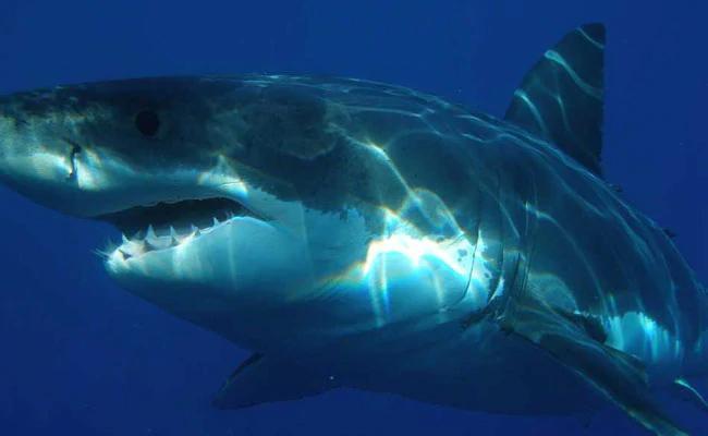 Man Eaten By Shark Wife Identifies Remains Through Wedding Ring In London - Sakshi