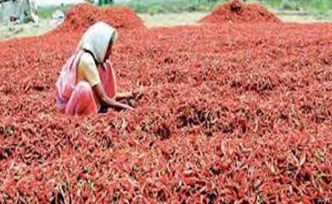 Mirchi Created Records With Prices Hike - Sakshi