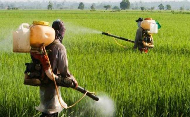 Fraud Pesticides Buisiness Doing In Nalgonda  - Sakshi