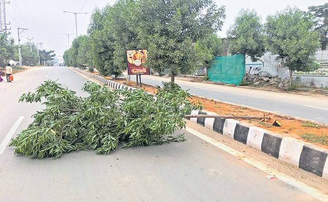 Rs 9500 fine for the Tree collapse - Sakshi