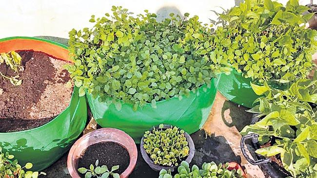 Home crops is healthy - Sakshi