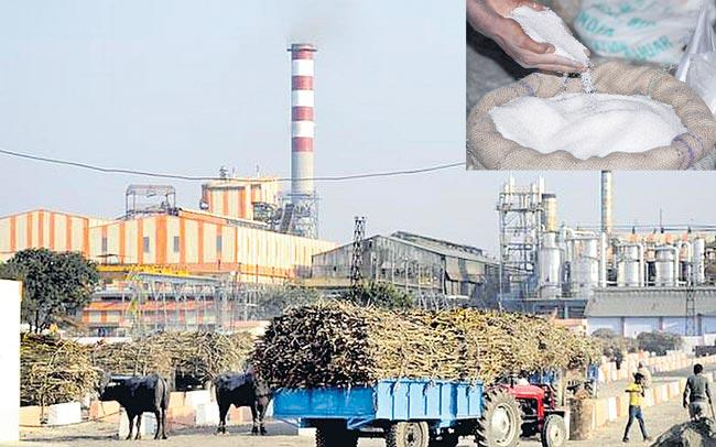 Sugar production plunges 53Persant YoY till November - Sakshi