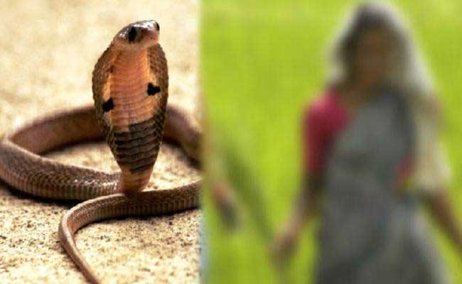 3 Snake Bite Cases Registered In Movva Of Krishna District - Sakshi