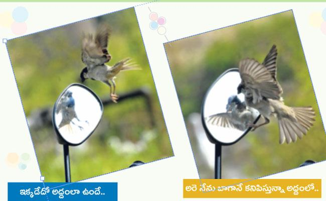 Photography: Sparrow Looking In Mirror - Sakshi