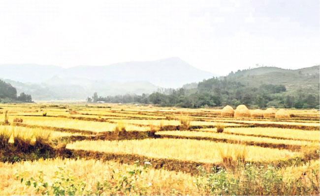 Arrangements For Grain Purchase In Visakha District - Sakshi