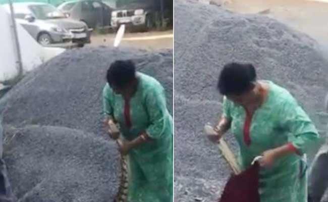 Woman Captures Python In Kochi Netizens Applaud Her - Sakshi