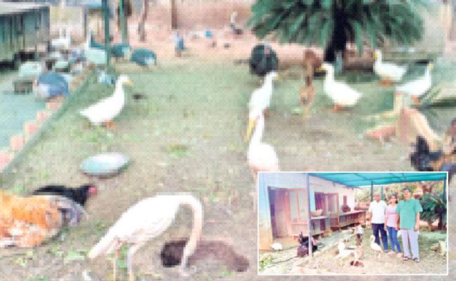 Article On Animal Lover Pavani - Sakshi