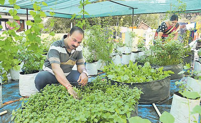 sagubadi story Of Organic Vegetable Cultivation In Moosapet - Sakshi