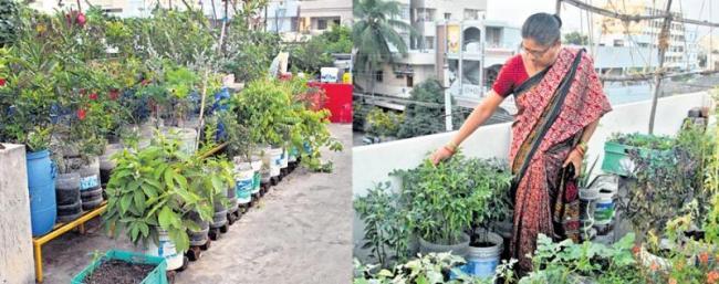 Growing Organic Vegetables at Home - Sakshi