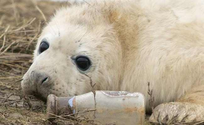 Seal Pup Seen Playing With Bottle Netizens Says Its Heartbreaking - Sakshi