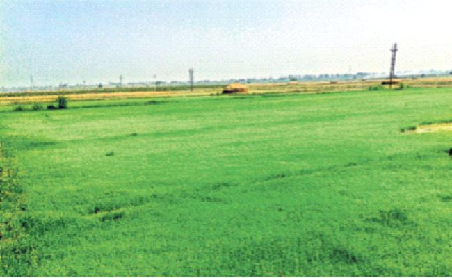 E Karshak Application For Farmers In Andhra Pradesh - Sakshi