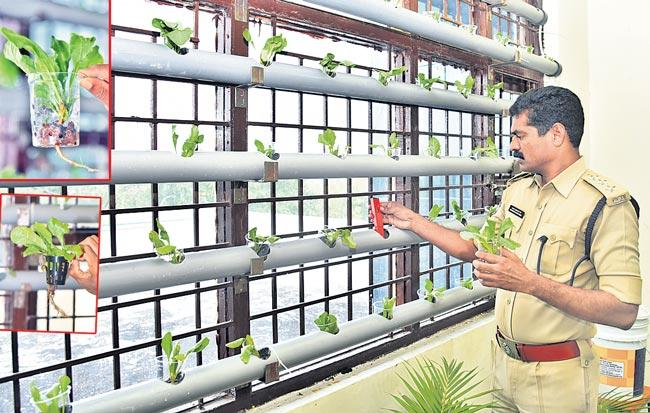 Hydroponic Farming in Sangareddy District Jail - Sakshi