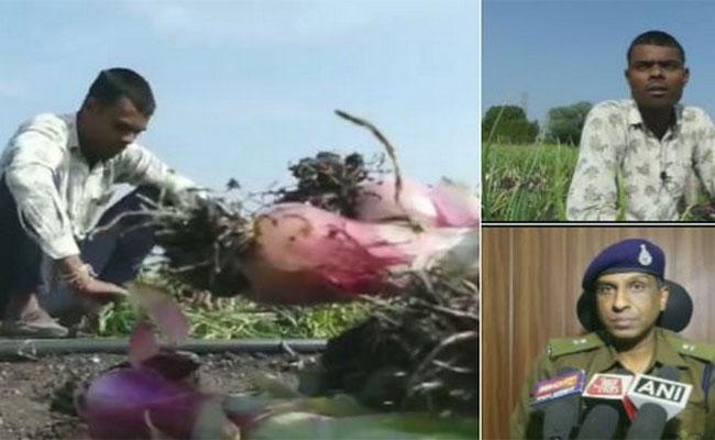 Onion Crop Stolen From Farm In Madhya Pradesh - Sakshi