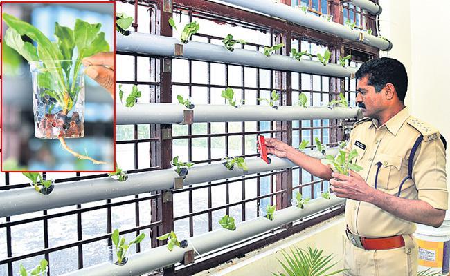 Hydroponic Farming in Sangareddy District Prison - Sakshi