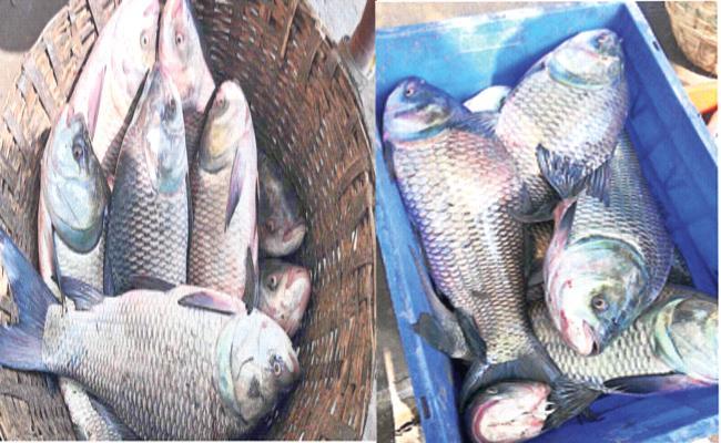 Demanding in West Godavari Fish Market - Sakshi