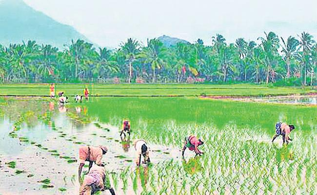 Delta farmers are ready for the cultivation of rabi crops - Sakshi