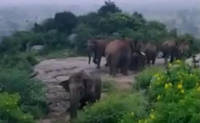 Elephants on the rampage in Kuppam - Sakshi