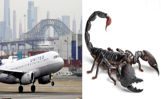 Woman Stung Multiple Times By A Scorpion On United Airlines Flight - Sakshi
