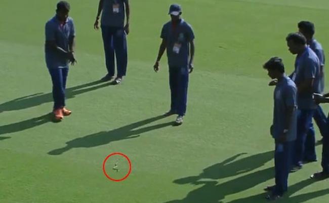 Snake Stops Ranji Trophy Cricket Match In Vijayawada - Sakshi
