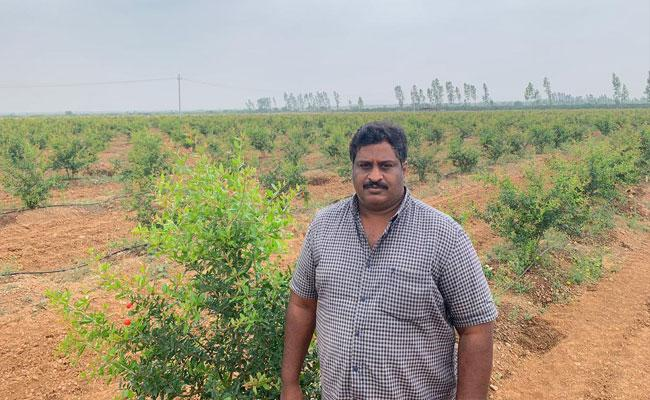 Ramaprasad Resigns From Software Job And Works In Agriculture - Sakshi